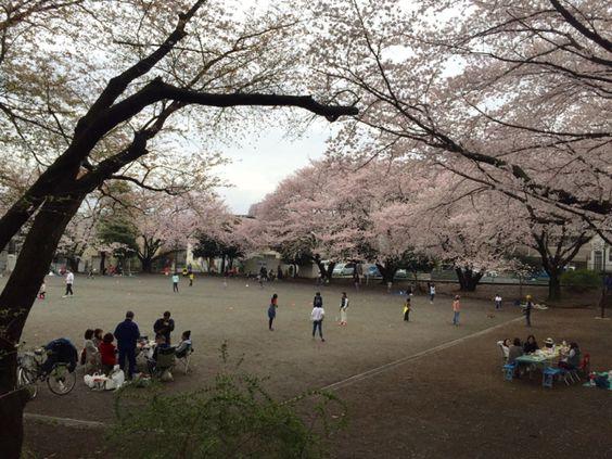 4:「満開の桜のもとで遊ぶという贅沢 」@小台公園