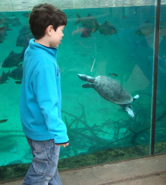 Zoo Boy Turtle: