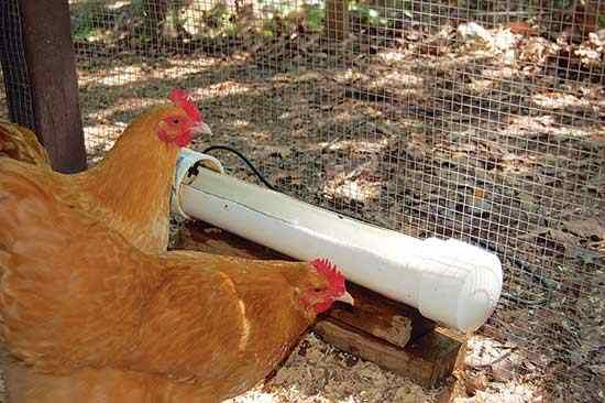 Homemade Automatic Chicken Waterer Chicken Waterer Automatic Chicken Waterer Homemade Chicken Waterer