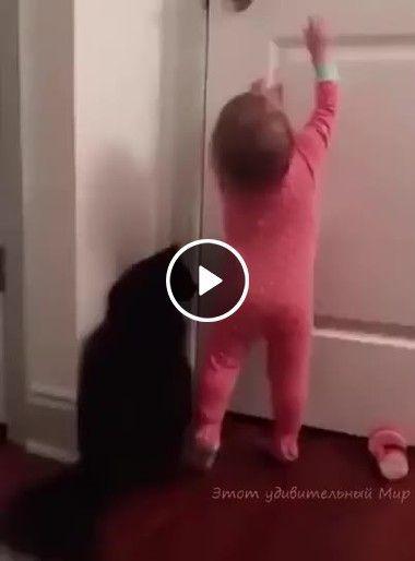 criança e o gato abrindo a porta