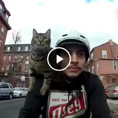 Gato passeia de bicicleta e fica animado.