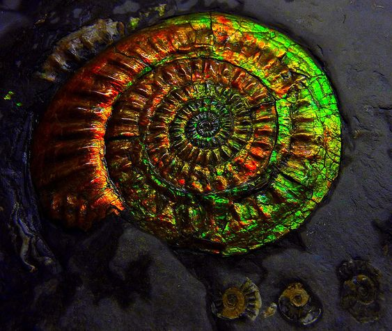 Ammonite fossil with a very thin opalized outer layer = ammolite, apparently only found in Alberta, Canada
