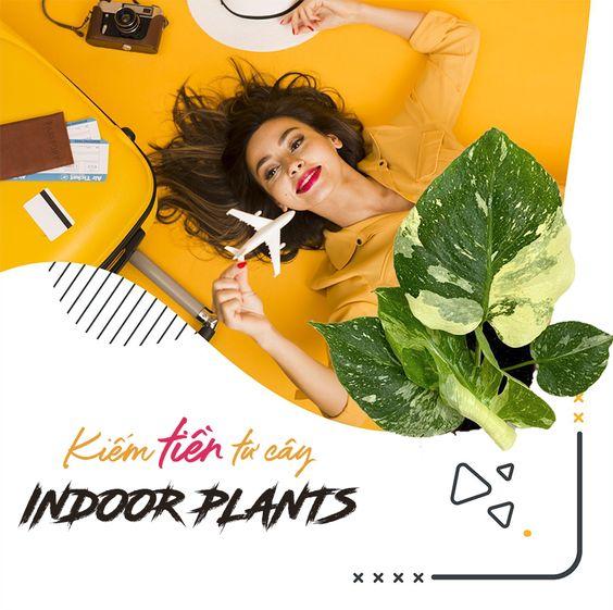 7 bước để bắt đầu kiếm tiền từ thú vui chơi cây Indoor Plants (House Plants) (Patty – Medium.com)