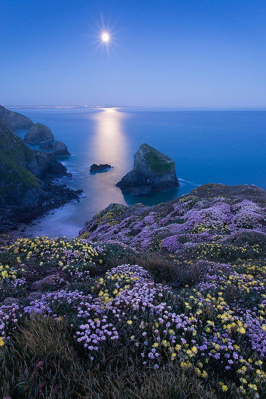~~Moonlit Thrift ~ Bedruthan Steps, North Cornwall, UK by George Edwards~~