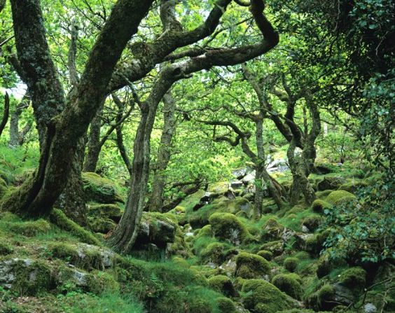 Piles Copse Dartmoor Favorite Places Spaces Pinterest Devon Most Haunted Places And