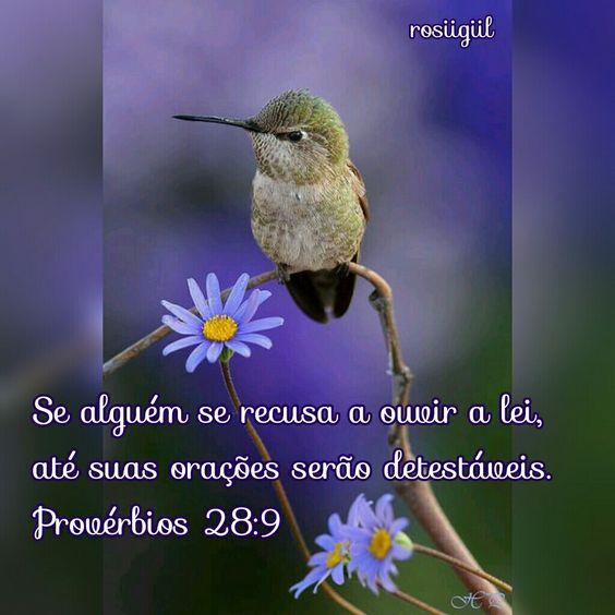 #Provérbios #Sabedoria #AmeALeiDoSenhor #VivaSeusDecretos #DeusFiel #rosiigiil