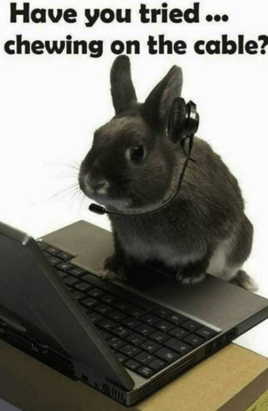 Pin On I Like Bunnies Shut Up