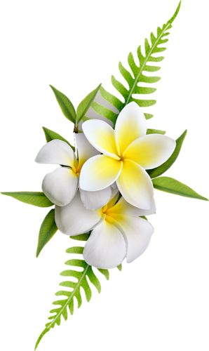 Exotic Flowers (61).png: