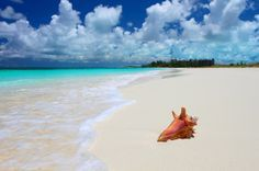Spectacular Luxury Turks & Caicos Resort - the Sands at Grace Bay