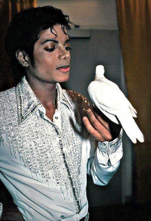 鳩を見つめるマイケルジャクソン