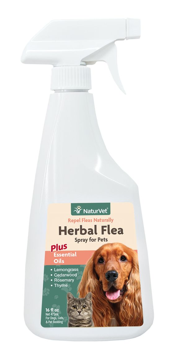 Herbal flea spray for pets pets products and sprays - Home remedies to keep fleas away ...