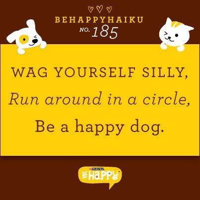 Dog haiku!