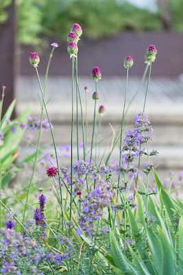 Gartenplanung, Gartendesign und Gartengestaltung: Mediterraner Garten