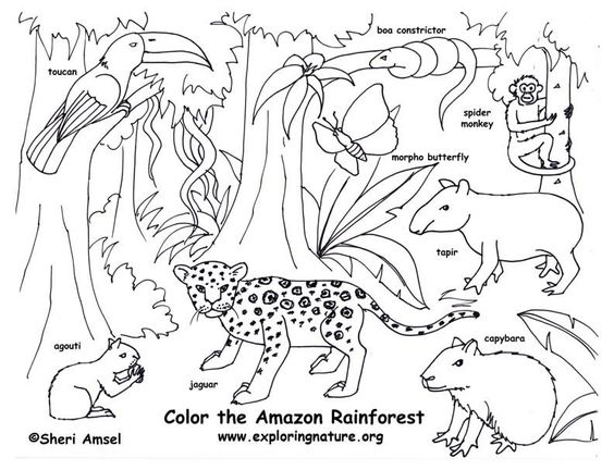 : Rainforest (Amazon) Coloring Page -- Exploring Nature Educational ...