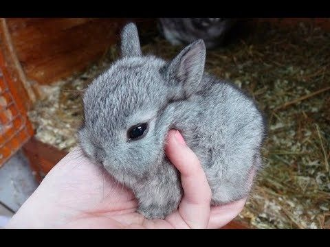 90 Seconds Of Precious Netherland Dwarf Bunnies Adorable Rabbits