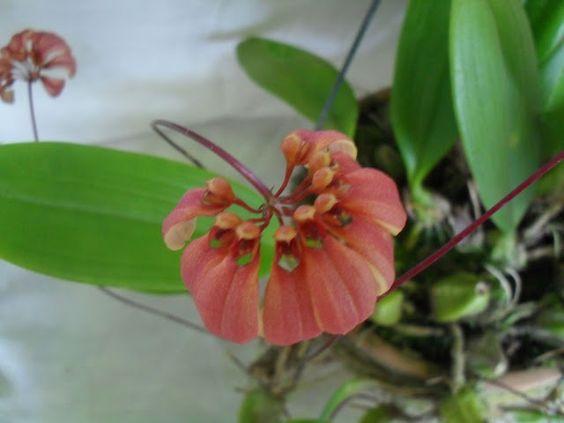 Criativa e Curiosa: Orquídeas estranhas e maravilhosas.