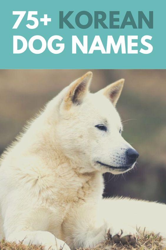 75 Korea Inspired Dog Names Tae Kwon Doggo Dog Names Dog Names Male Girl Dog Names Unique