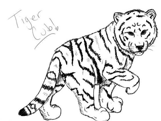 Pin On Tigres