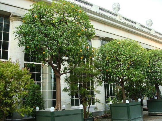 Jardin botánico bruselas