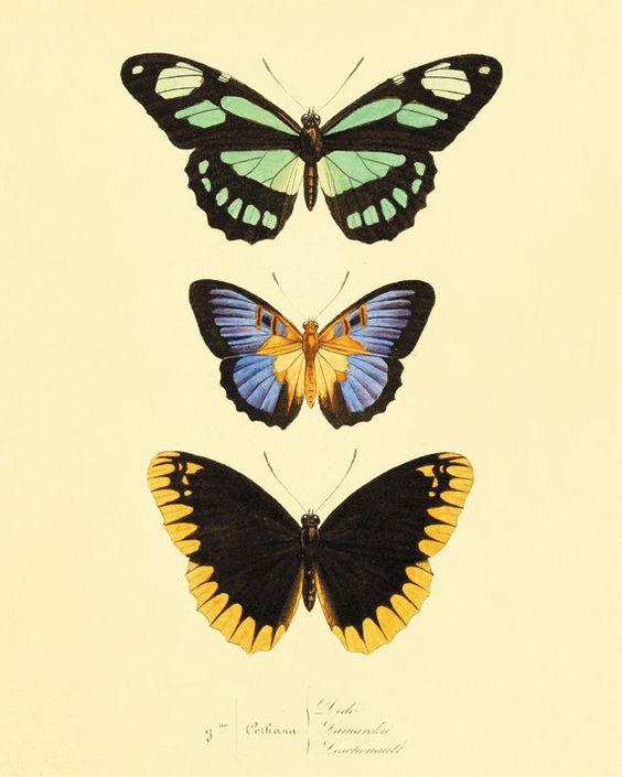 Green black Vintage Butterfly Print Nature print Natural History garden wall art old prints Victorian art vintage prints 8x10 art print
