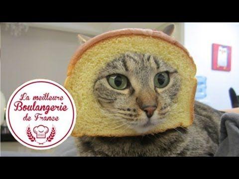 """Headshot d'un chat dans """"La meilleure boulangerie de France"""" (M6) - YouTube"""