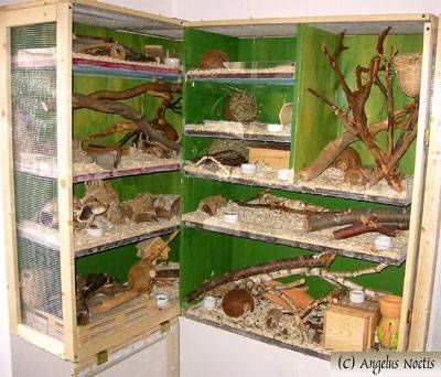 Cool mouse cage - photo#12