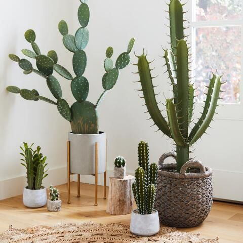 Faux Prickly Pear Cactus Plant World Market Cactus Plants Plant Decor Cactus House Plants