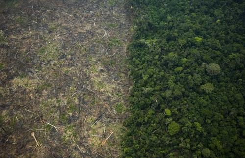 Desmatamento ilegal na Amazônia Brasil - Tumblr