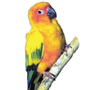 Sun Conure | Live Birds | PetSmart