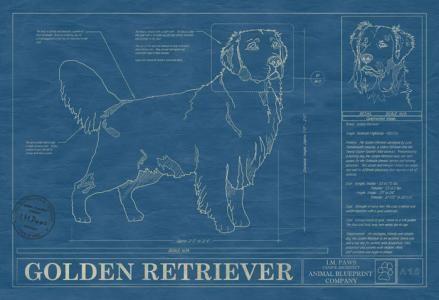 131 mejores imgenes de dog blueprints en pinterest arte del perro animal blueprint company golden retriever dog print malvernweather Gallery