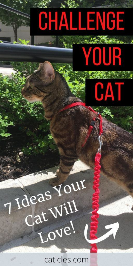 How To Keep A Cat Entertained In An Apartment Complete Guide In 2020 Cat Care Cat Mom Cat Problems