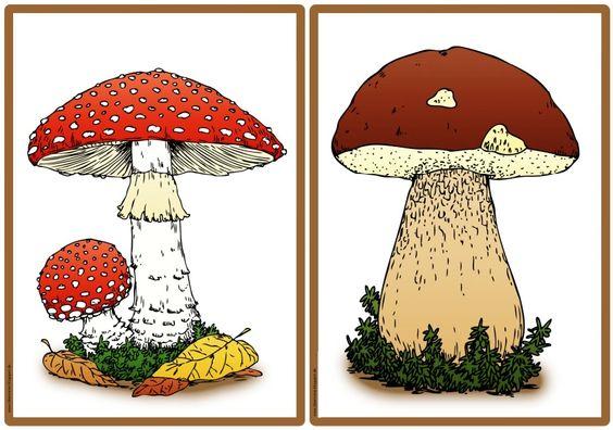 Pilze des Waldes (Bild- und Wortmaterial) Nachdem wir uns ...