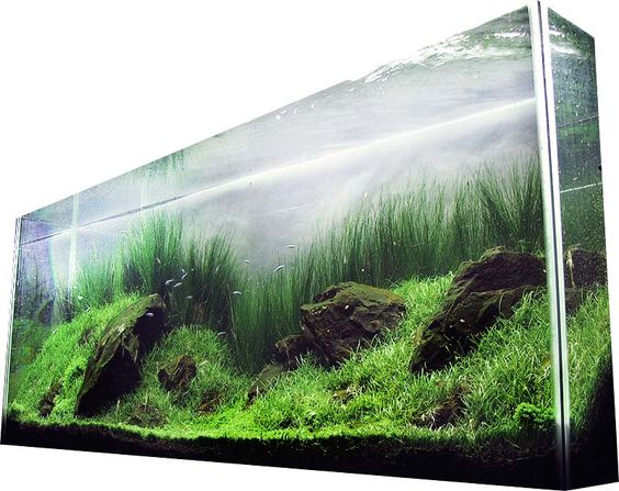 Tall, thin planted tank. Very natural and very amazing look.