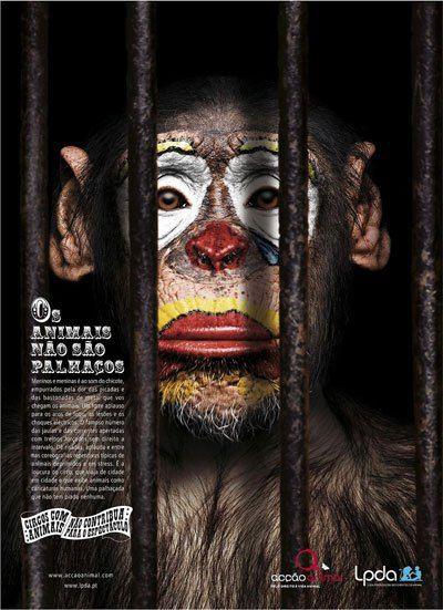 lpda-monkey