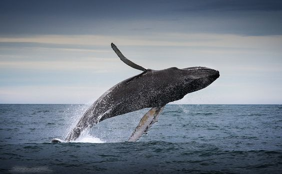 Photograph flying whale by freeezzzz  on 500px