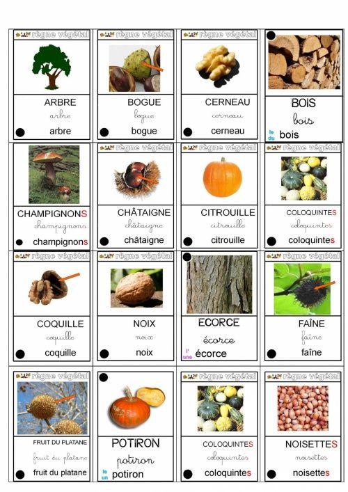 Le lexique d'automne et autres thèmes 1830 mots