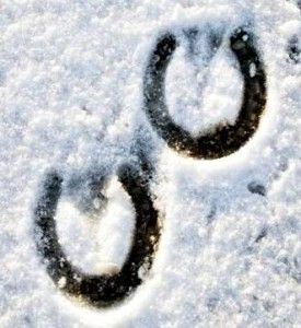 horse shoe hoofprints in winter snow