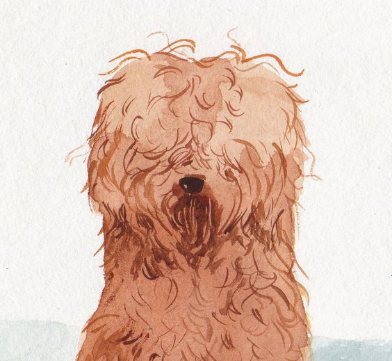 @Jean AntoshOmg! This is the best kind of labradoodle to keep at home if you don't have time to walk a real one.