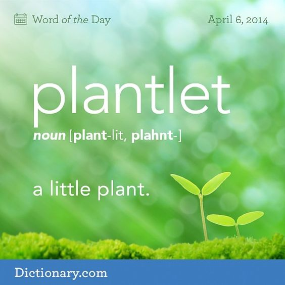 The summer garden is getting exciting now that the plantlets have more leaves. #wotd #wordoftheday #dictionarycom #instadaily #plantlet