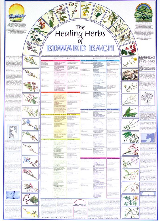 - The Healing Herbs of Edward Bach + Hangers