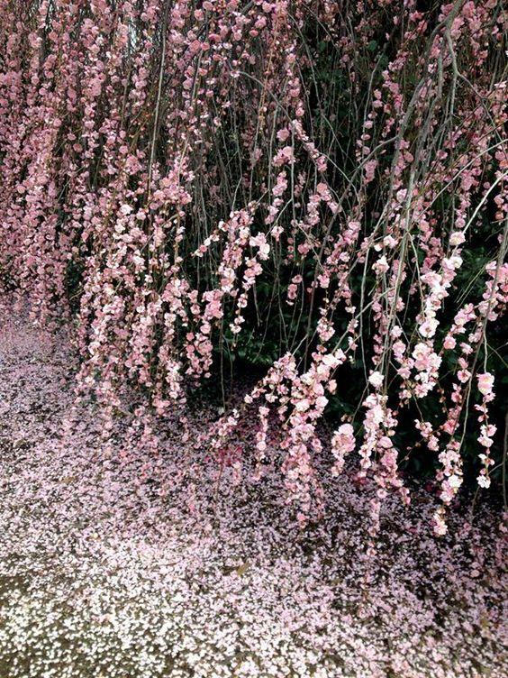 Tony Convey 'Spring'