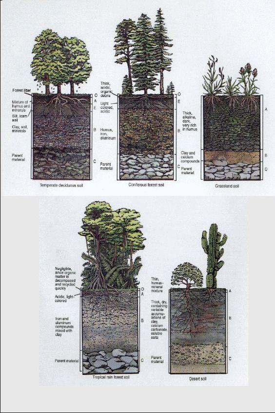 Estructura de los suelos según el ecosistema