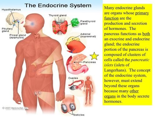 Endocrine System Flashcards Quizlet Endocrine System Endocrine System