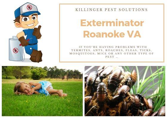 Nestled Near Virginia S Blue Ridge Mountains The Roanoke Valley Is Home To Roanoke The Largest City In Southwest Virginia Th Exterminator Roanoke Va Roanoke