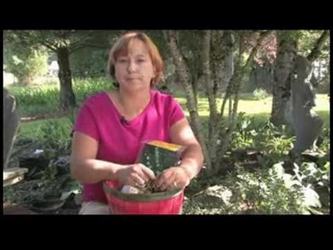 Gardening Tips : Care for Lily-of-the-Valley Bulbs - YouTube