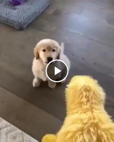 Cachorros e suas habilidades.