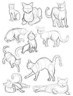 Cat Gestures Cats In Different Positions Sign Different Gestures Positions Zeichnung Skizzen Von Tieren Malen Und Zeichnen