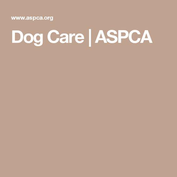 Dog Care | ASPCA