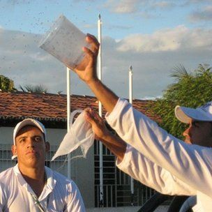 Researcher releasing Oxitec mosquitoes in trials in Brazil