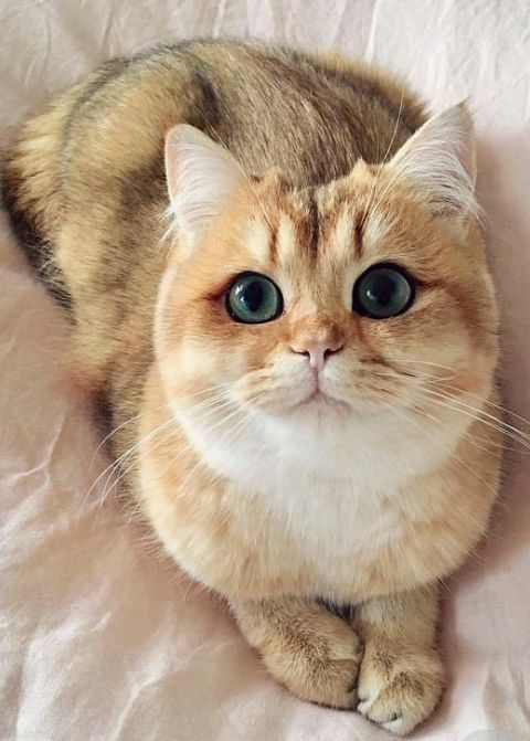 The Signs Of Healthy Cat Eyes Are Fairly Easy To Spot They Include Wide Open Eyes That Have No Obvious Redness Or Discolorati Cute Animals Cats Funny Animals